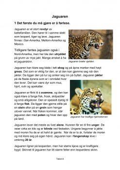 Lesestrategier og lesetrening i fagtekster - Jaguaren, A, Hefte 1, BM_1