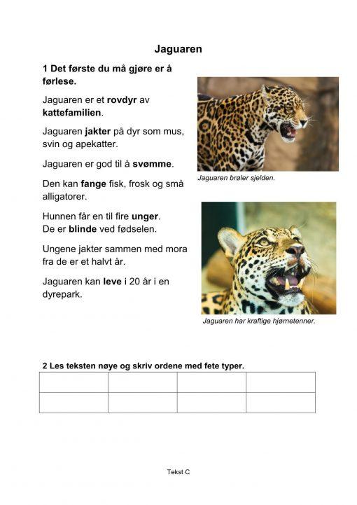 Lesestrategier og lesetrening i fagtekster - Jaguaren, C, Hefte 1, BM_1